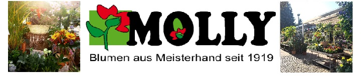 Blumen Molly - Berlin